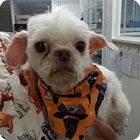 Adopt A Pet :: Jasper - Binghamton, NY