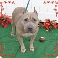 Adopt A Pet :: SASHA - also see DIAMOND - Marietta, GA