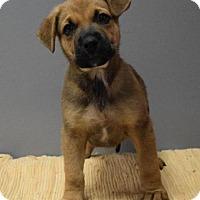 Adopt A Pet :: Plymouth - Valparaiso, IN
