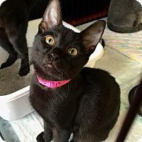 Adopt A Pet :: Yodette - Smithtown, NY