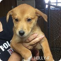 Adopt A Pet :: Holly - Trenton, NJ