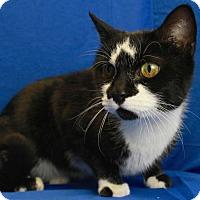 Adopt A Pet :: Pickles - Winston-Salem, NC