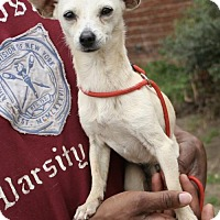 Adopt A Pet :: Frosty - Sugarland, TX