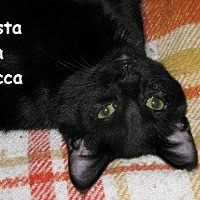 Adopt A Pet :: Rasta - Polson, MT