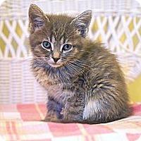 Adopt A Pet :: Sita - Victor, NY