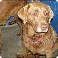 Adopt A Pet :: Keno - New Boston, NH