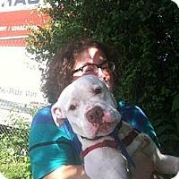 Adopt A Pet :: Bubs - Hillsborough, NJ