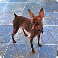 Adopt A Pet :: Rusty - Nashville, TN