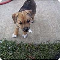 Adopt A Pet :: Hallie - Adamsville, TN