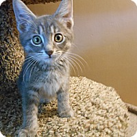 Adopt A Pet :: Shaggy - Richland, MI