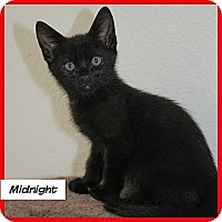 Adopt A Pet :: Midnight - Miami, FL