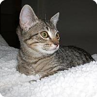 Adopt A Pet :: Moxy - Chandler, AZ
