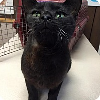 Adopt A Pet :: Tink - Sterling Heights, MI