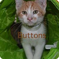 Adopt A Pet :: Buttons - Warren, OH