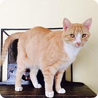 Adopt A Pet :: Jake - Harrisburg, NC