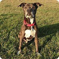 Adopt A Pet :: CID - New Cumberland, WV