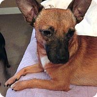 Adopt A Pet :: Simon - Davenport, IA