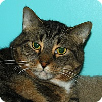 Adopt A Pet :: Stetson - North Branford, CT