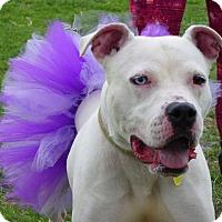 Adopt A Pet :: Alaska - Cleveland, OH