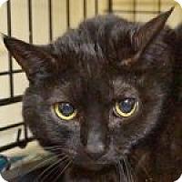 Adopt A Pet :: Princess Di - Medford, MA