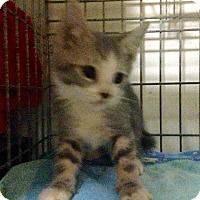 Adopt A Pet :: Minnie - East Brunswick, NJ
