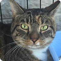 Adopt A Pet :: Katie - Medford, MA