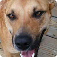 Adopt A Pet :: Berta - MINNEAPOLIS, KS