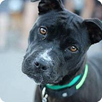 Adopt A Pet :: Sarene - Salt Lake City, UT