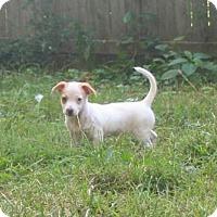 Adopt A Pet :: Juliet - Mechanicsburg, PA