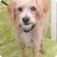 Adopt A Pet :: Tyler - Los Angeles, CA