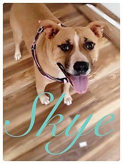 Terrier (Unknown Type, Medium) Mix Dog for adoption in Richmond, Virginia - SKYE