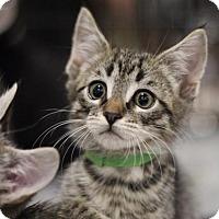 Adopt A Pet :: Garth - Sacramento, CA