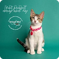 Adopt A Pet :: Bethany - Houston, TX