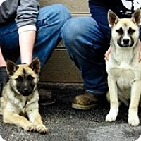 Adopt A Pet :: Polli and Esther - Oswego, IL