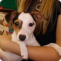 Adopt A Pet :: Noel East Colonial Petco - Orlando, FL