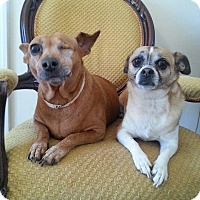 Adopt A Pet :: Ruby & Allie - Gaithersburg, MD