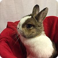 Adopt A Pet :: Vienna - Winnipeg, MB
