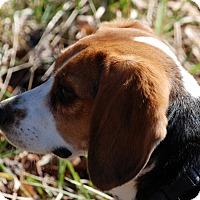 Adopt A Pet :: Baby Girl - Salem, WV