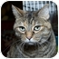 Photo 1 - Domestic Shorthair Cat for adoption in Sacramento, California - Epona