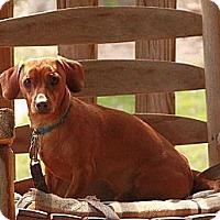 Adopt A Pet :: JoJo - Staunton, VA