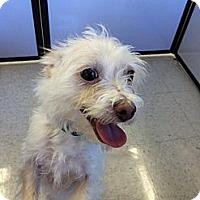 Adopt A Pet :: Snow - Vista, CA