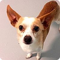 Adopt A Pet :: Naveen - Muskegon, MI