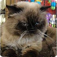 Adopt A Pet :: Bentley - Beverly Hills, CA