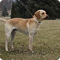 Adopt A Pet :: Nicholas - Lewisville, IN