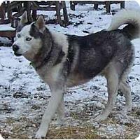 Adopt A Pet :: Prince - Belleville, MI