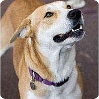 Adopt A Pet :: Rudie - Portland, OR