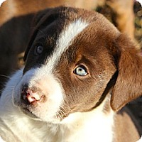 Adopt A Pet :: *Cole - PENDING - Westport, CT
