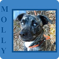 Adopt A Pet :: MOLLY - Dallas, NC