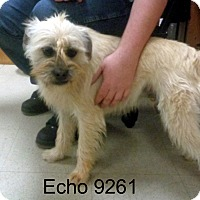 Adopt A Pet :: Echo - baltimore, MD