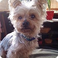 Adopt A Pet :: Reese - Bunnell, FL
